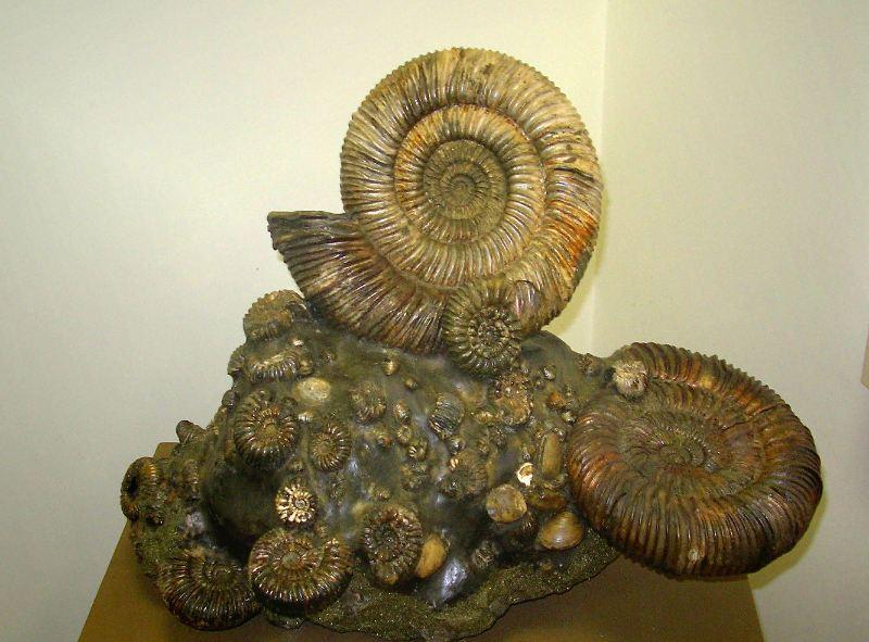 Волшебный камень аммонит